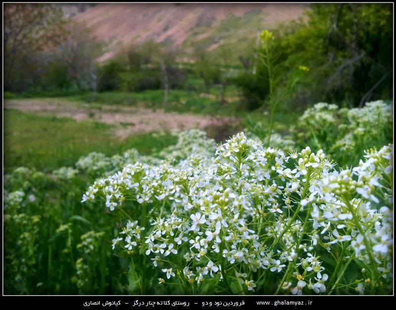 روستای کلاته چنار شهرستان درگز